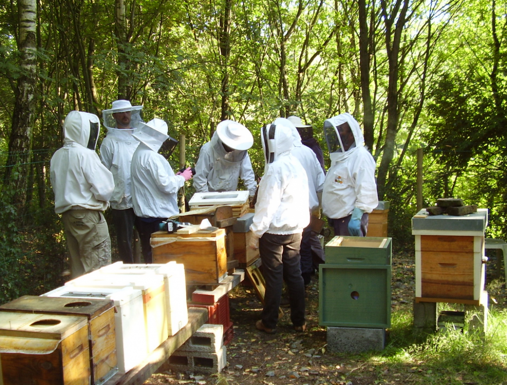 cours-apiculture